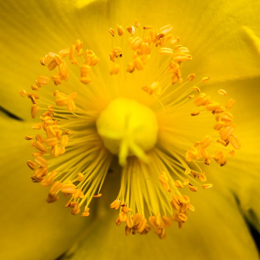 Blomstrende variant av forrige bilde
