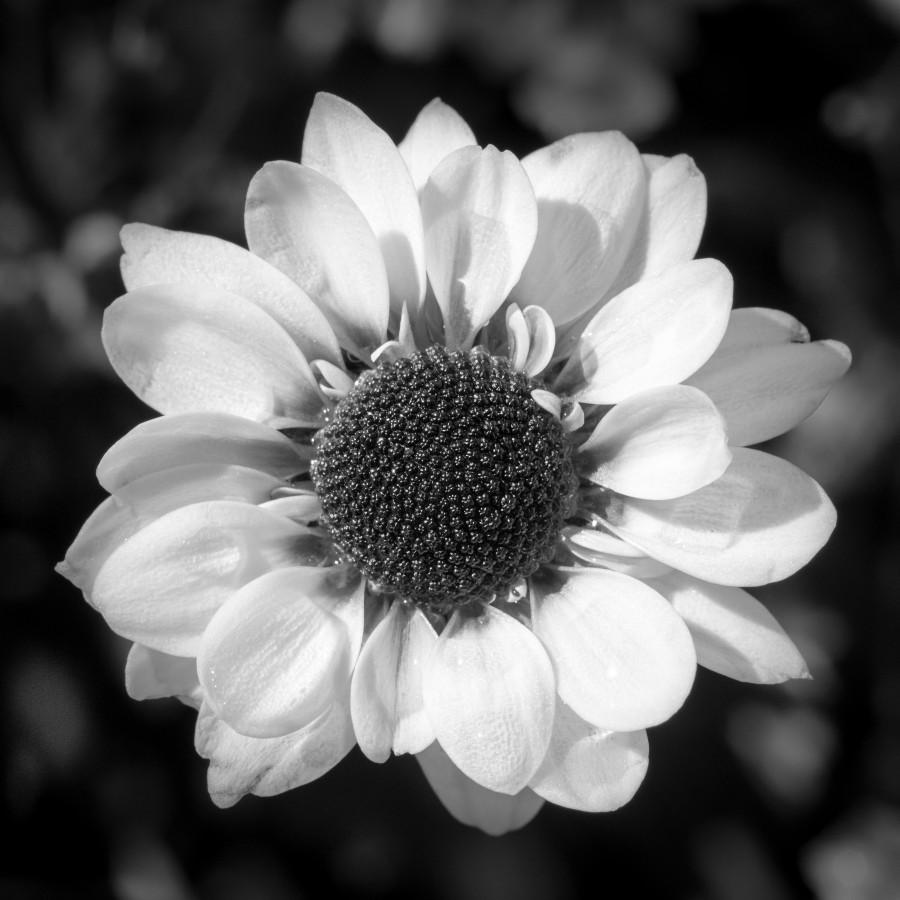 Blomst...